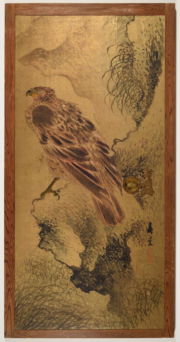 Bird of Prey on a Rock